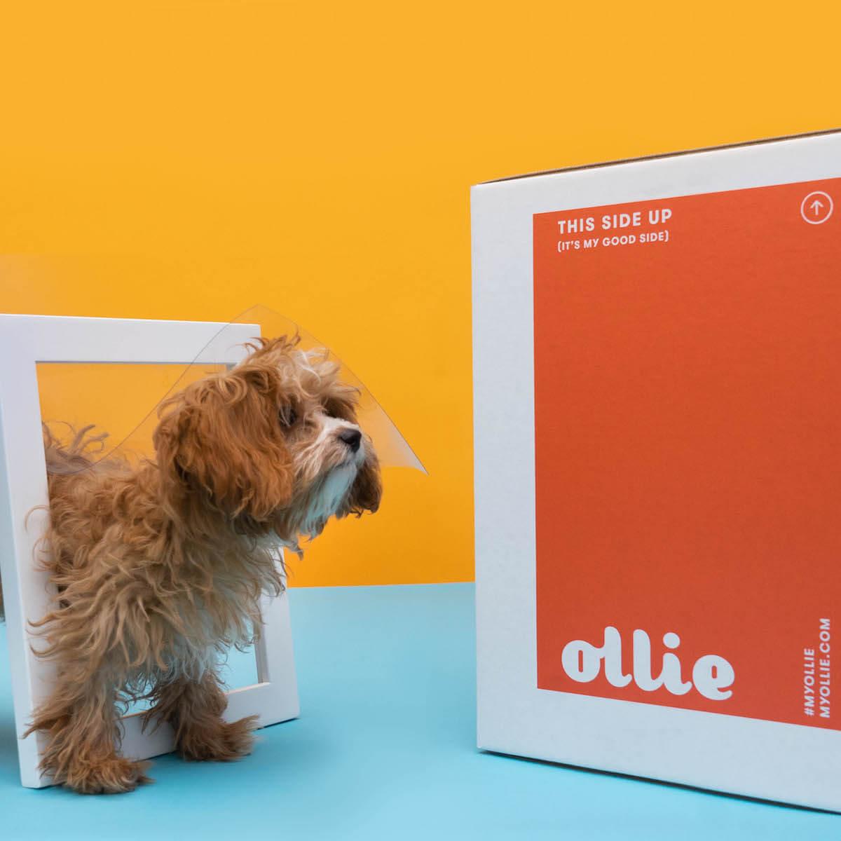 🐶 50% OFF Ollie Fresh Dog Food...