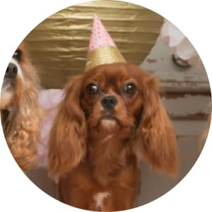 dog with a birthday cap