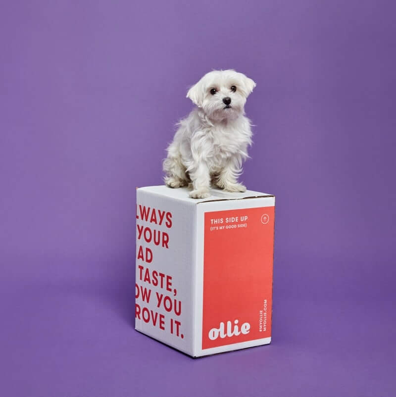 White dog sitting on an Ollie shipping box